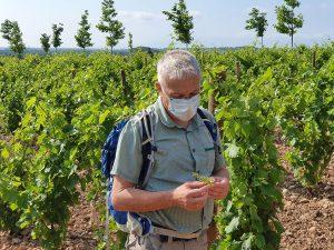 Chambre d'hote guide oenotourisme vigne Rivesaltes 66