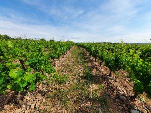 Chambre d'hote oenotourisme vigne Rivesaltes 66